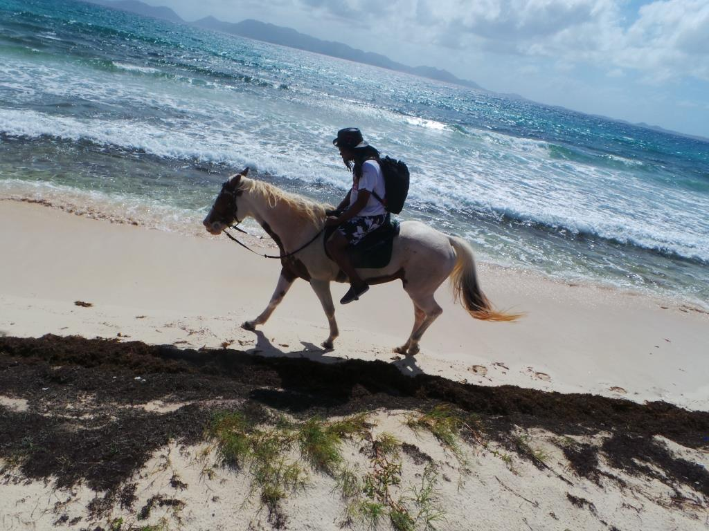 Great Wallpaper Horse Beach - Anguilla-2015-186  Pictures_487425.jpg